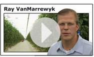 Icon: Ray VanMarrewyk