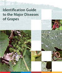 Publication Cover - Identification Guide to the Major Diseases of Grapes