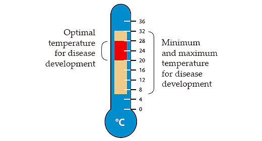 Optimal temperature for disease development vs. Minimum and maximum temperature for disease development