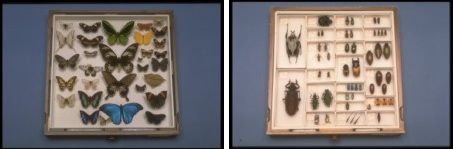 Tray of specimens in the Canadian National Collection of Insects