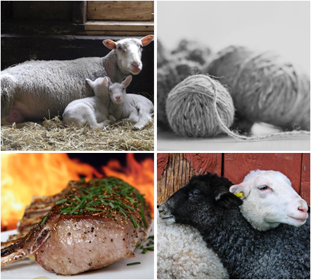 Decorative picture of sheep and lamb